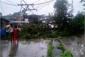 a tree fell down on road in palampur