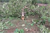 13 cases filed against 2 persons on tree bearing trees