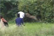 leopard attack on 3 people in jabalpur
