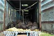 40 people killed in knee jerk killing cattle in a truck