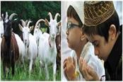 shahrukh salman and bahubali goats demanded in markets before bakrid