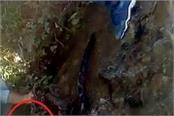 leopard body found in suspicious circumstances