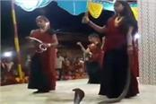 junagarh girls performed garba holding cobra