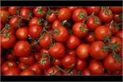 tomatoes garlic in pakistan fierce smuggling from india