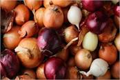 government prepares to start onion prices boom