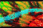 researchers develop colour changing chameleon skin