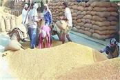 government so far purchased 151 17 lakh tonnes of paddy at msp