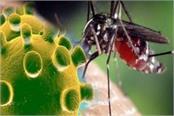 dengue increases corona decreased 11 positive cases