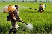 companies selling dangerous pesticides indian farmers