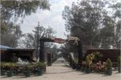 cheetah will be brought to patiala s zoo