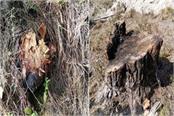 forest mafia run axe on tree