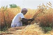 relief agriculture department issued advisory for harvesting