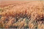 corona virus may affect crops farmers in dilemma