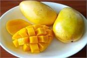 corona effect mango prices may increase this year