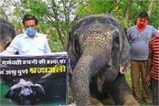 kerala elephant arrested forest department