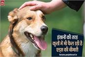 like humans aids disease is spreading in dogs