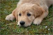 if you are fond of raising dogs then you must read this news once