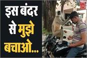 policemen troubled by this monkey s antics