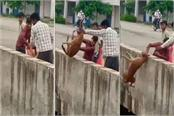 once again the limits of cruelty now the dog was thrown canal in jabalpur