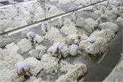 us bans cotton and tomato products from china s xinjiang