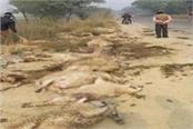 balrampur 82 sheep killed in road accident 18 injured