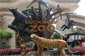gorakhpur zoo will be sent from lucknow zoo to tiger leopard