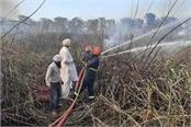 fire in bird sanctuary