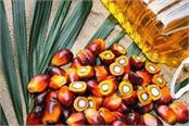 softening in overseas palm oil softening in oil and soybean