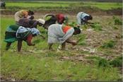 if new agricultural laws are not implemented then the goal of doubling