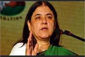mp and mla join together one and one eleven maneka gandhi