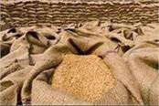 haryana news today wheat among videography