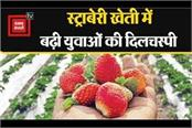 youth in bihar have increased interest in strawberry farming and goat farming