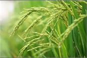 odisha demands increase in minimum support price of paddy