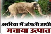 wild elephant created ruckus in araria