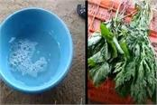 shopkeepers making withered green vegetables alive with chemicals