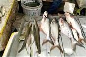 banned fishes being sold indiscriminately in the industrial city