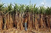 arrears of sugarcane farmers
