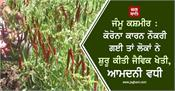 j k people lost their jobs due to corona and started organic farming