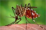 dengue kapurthala bhulath