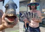 fisherman finds human toothed   fish    pictures go viral
