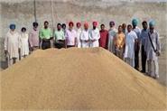 dana mandi dina sahib starts procurement of paddy