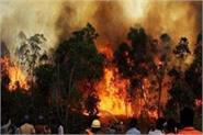 forest department alert after fire in forests