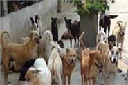 sitapur genetic tests of dogs