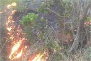 the fierce fires in the national forest of yamunanagar