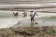 farmers lying on the station in search of laborers