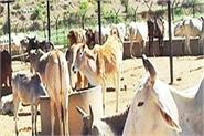 animal husbandry department s team khojian visited gosadan