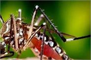 number of dengue patients in this district reaches 150