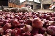 onion price will stop it will be cheaper before diwali