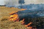 in punjab 4036 cases of stubble burning were reported in week