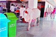 stray animals on the platform